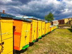 visnovica bee hives